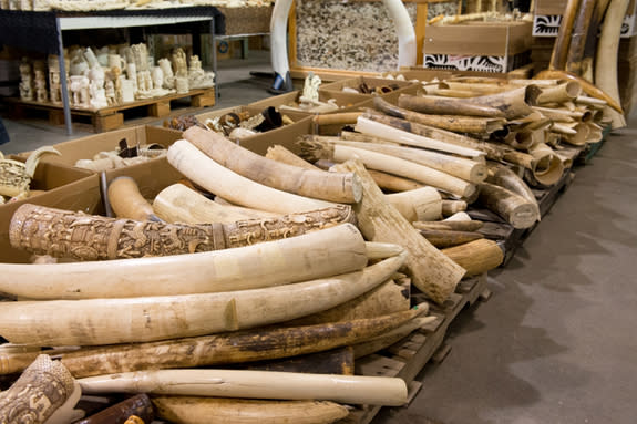 Taking a Page from Eliot Ness to Fight Wildlife Trafficking (Op-Ed)