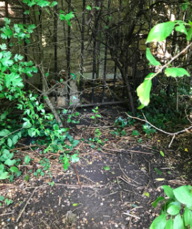 The injured cat was found tied to a fence by a school in Leyland. (RSPCA)