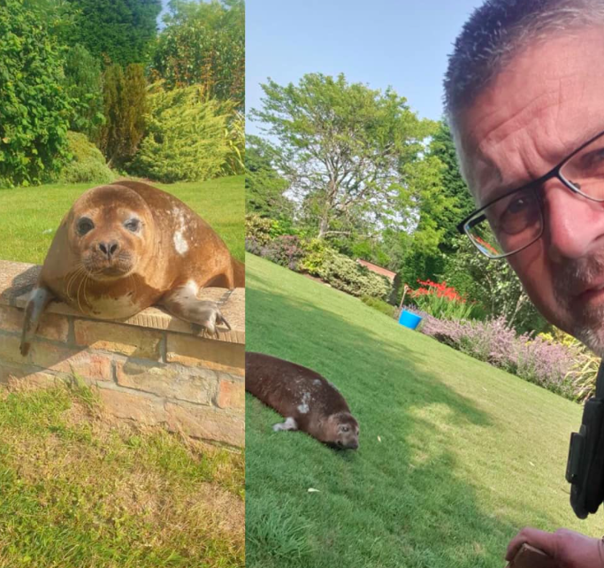 Dandy the seal was discovered lounging in the garden of a shocked homeowner. (Sleaford Police)