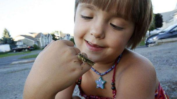 PHOTO: Sophia Spencer, 8, has been fascinated with bugs since the age of two. (Nicole Spencer)