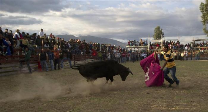 An amateur bullfighter waves a cape in front of a bull during the La Octava de Montalvo parade at Juan Montalvo village in San Pedro, Cayambe, some 46 km (28.6 miles) north of Quito, August 11, 2012.