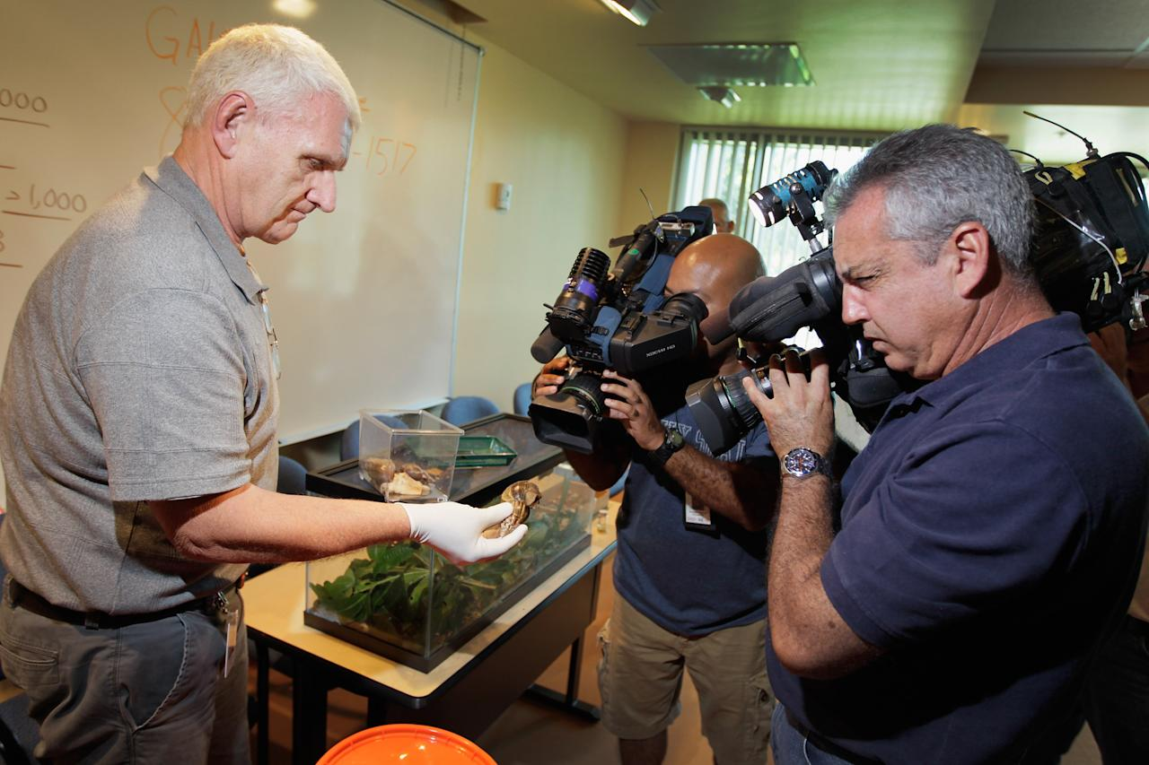 MIAMI, FL - SEPTEMBER 15:  Louis Lodyga, Environmental Supervisor Division of Plant Industry with the Florida Department of Agriculture and Consumer Services, shows the media a Giant African land snail that had been collected and identified as part of a population of the invasive species in Miami-Dade county on September 15, 2011 in Miami, Florida. The Giant African land snail is one of the most damaging snails in the world because they consume at least 500 different types of plants, can cause structural damage to plaster and stucco, and can carry a parasitic nematode that can lead to meningitis in humans. An effort to eradicate the snails is being launched. The snail is one of the largest land snails in the world, growing up to eight inches in length and more than four inches in diameter.  (Photo by Joe Raedle/Getty Images)
