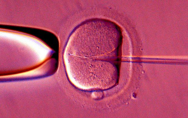 Sperm is inserted into an egg  - Credit: Alamy