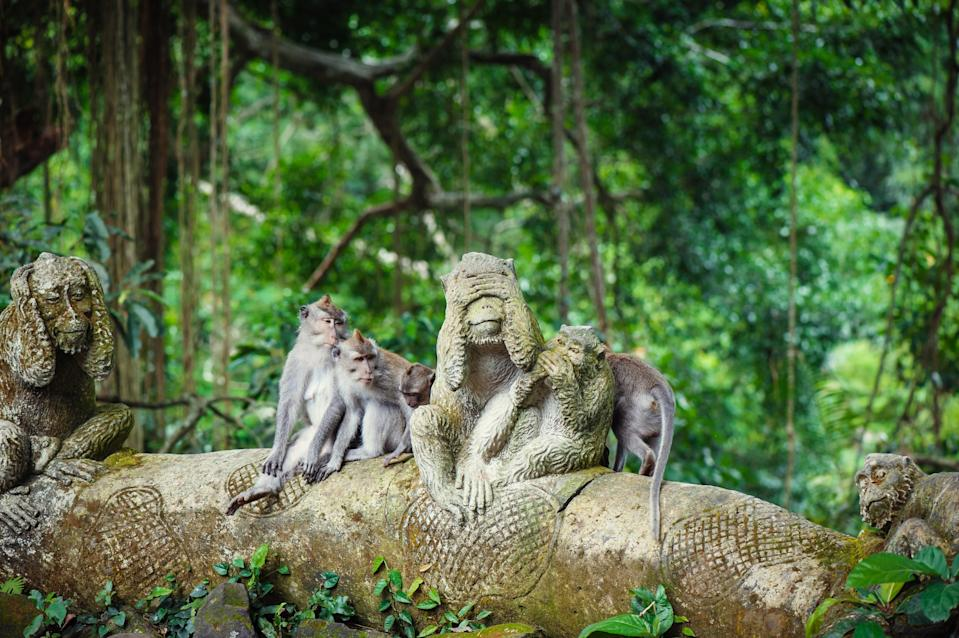 <p><strong>What's this place all about?</strong><br> This tourist magnet might look like an open-air zoo attraction, but it's actually a holy site with a 1000-plus band of long-tailed Balinese macaques in their natural habitat. As cantankerous as some of the monkeys can be—your dangling jewelry, bags, and conspicuous food will invite aggressive sticky fingers—the primates are considered sacred by Balinese Hindus who come to pray in the complex's three ancient temples.</p> <p><strong>What can we expect to see here?</strong><br> Roam around the 31-acre forest and you'll find scores of monkeys—playing, resting, fighting, or scheming to snatch bananas or sunglasses from tourists. Otherwise, the three 14th-century temples are a lovely sight, as are the moss-covered monkey sculptures throughout the sanctuary.</p> <p><strong>Is it easy to get around?</strong><br> Tall banyan and nutmeg treetops provide ample shade, and paths are smoothly paved. The sanctuary staff does a great job to ensure a safe, enjoyable visit.</p> <p><strong>Anything else we should know before planning a visit?</strong><br> Steer clear if you're averse to free-roaming primates—and tourists. Otherwise, follow the directions—all of them—to have a burglary-free, bite-free experience with the monkeys. And though it's not recommended, you can feed them bananas—at your own risk.</p>
