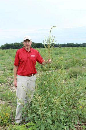 Iowa State University professor of agronomy and weed specialist Bob Hartzler, at about 6 feet tall, stands next to a Palmer amaranth plant in a field enrolled in the federal Conservation Reserve Program in Chickasaw County, Iowa, United States in this 2016 handout photo obtained by Reuters March 31, 2017.     Bob Hartzler/Iowa State University/Handout via REUTERS