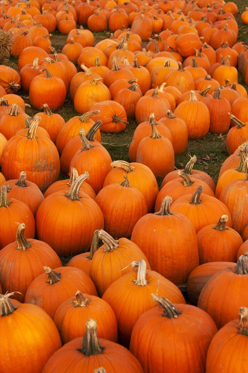 """<p><strong>Johnston, Rhode Island</strong></p><p>Along with scoping out the many pumpkins at <a href=""""https://salisburyfarm.com/giant-corn-maze/"""" rel=""""nofollow noopener"""" target=""""_blank"""" data-ylk=""""slk:Salisbury Farm"""" class=""""link rapid-noclick-resp""""><strong>Salisbury Farm</strong></a>, you can also work through the corn field maze — day or night. Their moonlight maze, which is put on in October, is a can't-miss opportunity to test your problem-solving skills under the stars. Tickets start at $9 for kids and $11 for adults on weekdays, $10 for kids and $12 for adults on weekends/holidays while children ages 2 and under are always free!</p><p><em>*This photo is not from Salisbury Farm.</em></p>"""