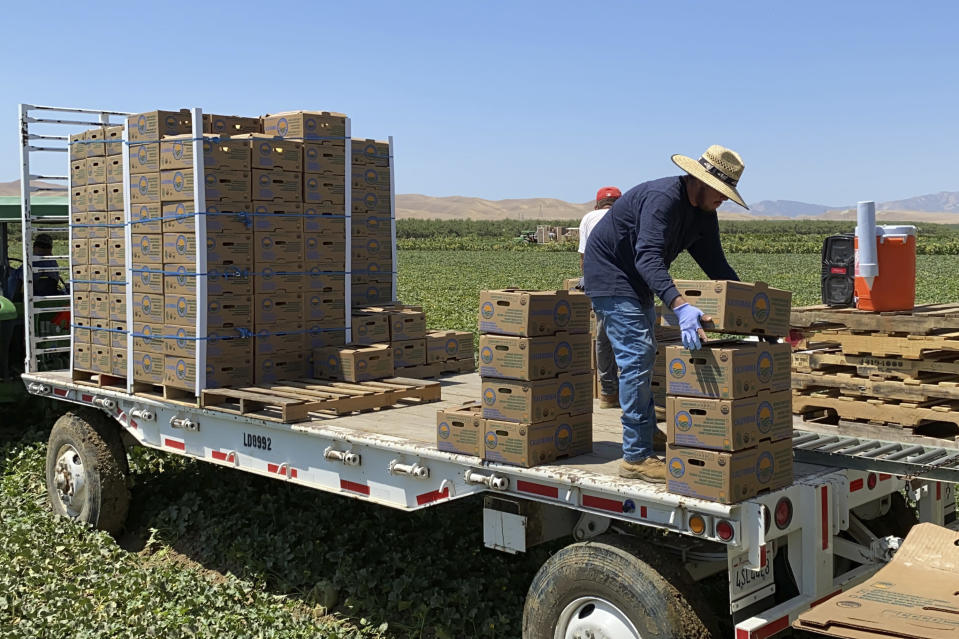Farmworkers at Del Bosque Farms stack boxes of melons on a mobile platform in Firebaugh, Calif., on Friday, July 9, 2021, where temperatures were expected to surpass 110 degrees this weekend. (AP Photo/Terry Chea)