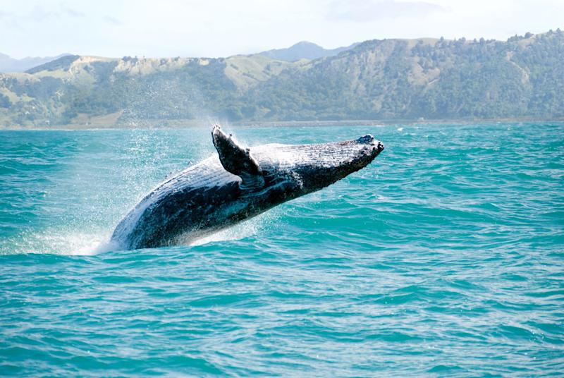 Will drones play a role in saving the whales and the dolphins?