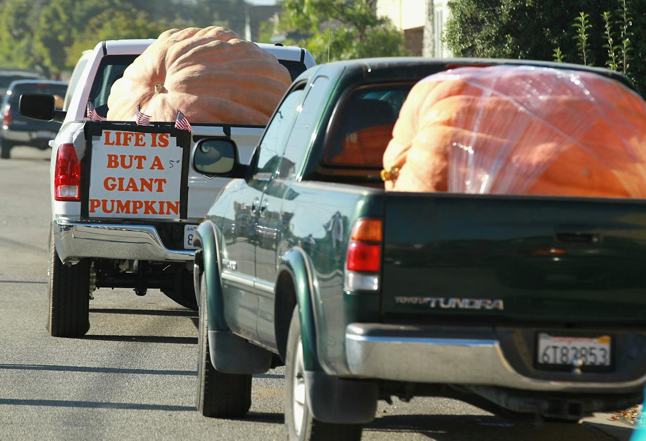 HALF MOON BAY, CA - OCTOBER 11:  Trucks loaded with giant pumpkins line up before the start of the 37th Annual Safeway World Championship Pumpkin Weigh-Off on October 11, 2010 in Half Moon Bay, California. Ron Root of Citrus Heights, California won the competition with a 1,535 pound pumpkim and took home $9,210 in prize money equal to $6 a pound.  (Photo by Justin Sullivan/Getty Images)
