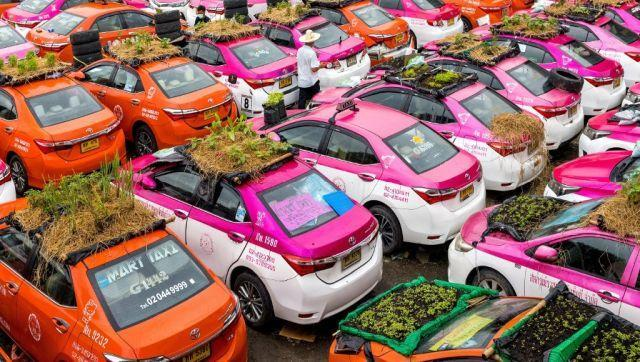 """""""This is our last option,"""" Thapakorn Assawalertkun, one of the company owners, told AFP, saying many of the vehicles still had large loans outstanding on them. """"We figured we'd grow vegetables and farm frogs on the roofs of these taxis."""" AFP"""