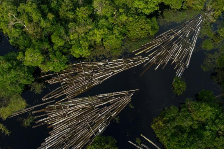 An aerial view of logs of wood seized by the Amazon Military Police at the Manacapuru River in is seen in Manacupuru, Amazonas State, Brazil on July 16, 2020 aftert he Amazon Military Police seized about 900 logs of wood cut t by illegal loggers