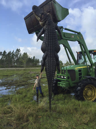 Nine-year-old Mason Lightsey is pictured with a 800-pound (363 kg) giant alligator at his father's farm in Venus, Florida