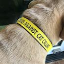 <p>This <span>Feminist Goods Co. Dogs Against Cat Calling Collar</span> ($34) made us smile. This is a must have for any feminist dog.</p>