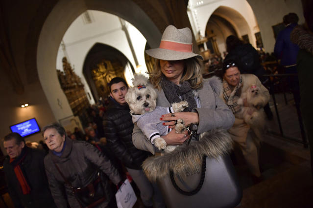 <p>A woman holds up her pet inside Saint Pablo church, during the feast of St. Anthony, Spain's patron saint of animals, in Zaragoza, northern Spain, Wednesday, Jan.17, 2018. (Photo: Alvaro Barrientos/AP) </p>