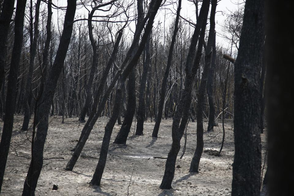 A view of the burnt forest after a wildfire in Varibobi area, northern Athens, Thursday, Aug. 5, 2021. Forest fires fueled by a protracted heat wave in Greece raged into Thursday, forcing the evacuation of dozens of villages as firefighters managed to prevent the flames from reaching the archaeological site at the birthplace of the ancient Olympics. (AP Photo/Lefteris Pitarakis)