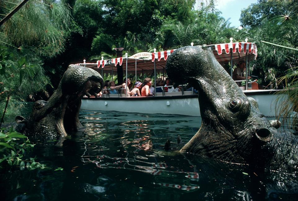 Hippos in the river at Jungle Cruise