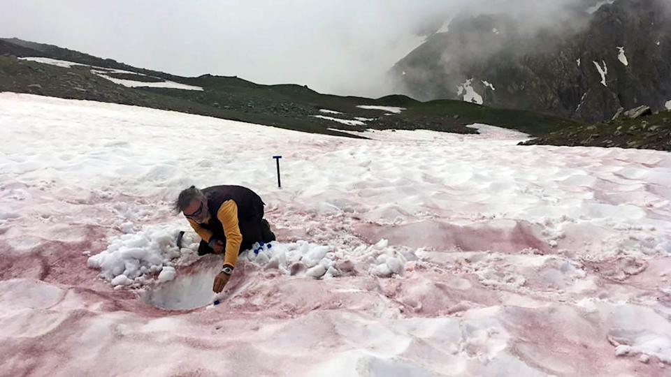 An undated handout photo shows a researcher sampling red-colored snow in the Alps. Researchers are starting to investigate the species that drive alpine algal blooms to better understand their causes and effects. (Jean-Gabriel/Valaey/Jardin du Lautaret/UGA/CNRS/ALPALGA via The New York Times) -- NO SALES; FOR EDITORIAL USE ONLY WITH NYT STORY SLUGGED IRED SNOW ALGAE BY CARA GIAIMO FOR JUNE 11, 2021. ALL OTHER USE PROHIBITED. --