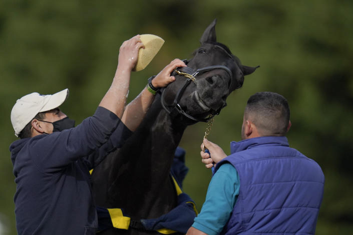 Kentucky Derby winner and Preakness entrant Medina Spirit is bathed after a workout ahead of the Preakness Stakes horse race at Pimlico Race at Pimlico Race Course, Wednesday, May 12, 2021, in Baltimore. (AP Photo/Julio Cortez)