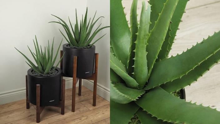 Sorry, guys. You won't get any burn relief from this fake plant.