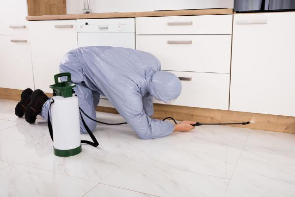CH_A Beginner Guide To Pest Control Malaysia - 1