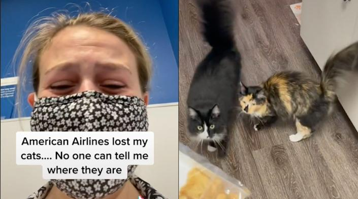 """On the left, Ariel Dale in a TikTok with the caption """"American Airlines lost my cats.... No one can tell me where they are."""" On the right, a photo of her two cats, Mr. Tumnus and Stevie Nicks."""