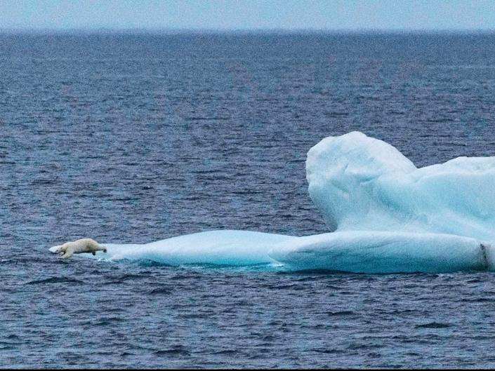 Polar bear on an iceberg