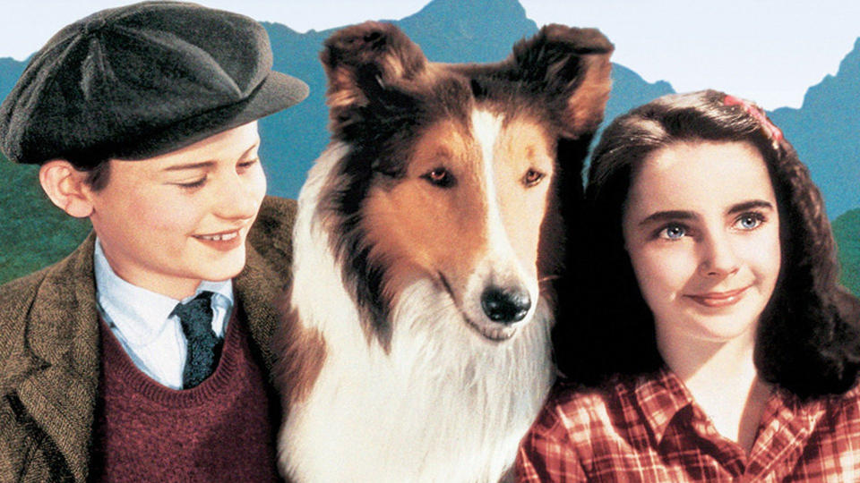 'Lassie Comes Home'. (Credit: MGM)