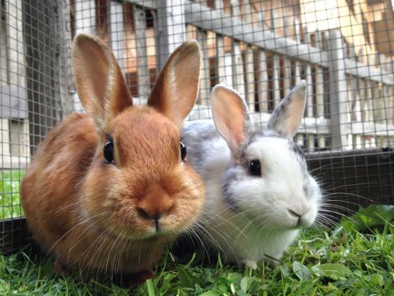 City farms are often home to rabbits (Getty/iStock)