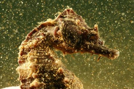 A seahorse is seen during a dive in the village of Stratoni near Chalkidiki, Greece, September 23, 2016. Vasilis Mentogiannis/Handout via REUTERS