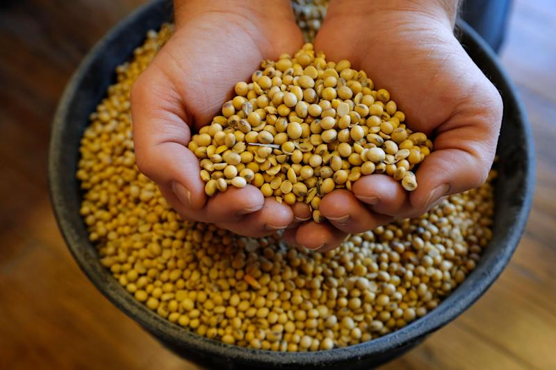 In this Nov. 21, 2018, photo, Justin Roth holds a handful of soybeans at the Brooklyn Elevator in Brooklyn, Iowa. Farmers still working to get out their remaining corn and soybeans after a weather-plagued harvest season are also struggling to figure out what to do with the record soybean crop for which they have fewer customers willing to buy due to the ongoing tariff dispute. (AP Photo/Charlie Neibergall)