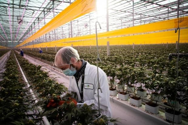 For the most part, the stock prices of Canadian cannabis companies have failed to maintain or move past the lofty highs they reached in 2018, when Canada legalized the drug.