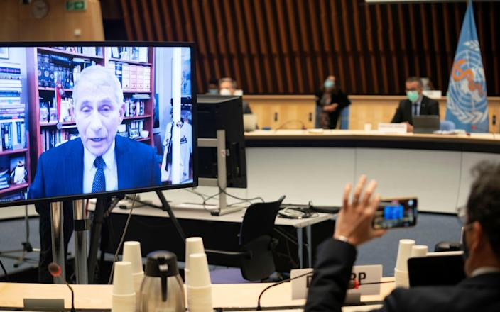 Dr Anthony Fauci address the World Health Organisation of the state of the Covid-19 pandemic in the US on Joe Biden's first full day in office - Christopher Black/WHO/Reuters