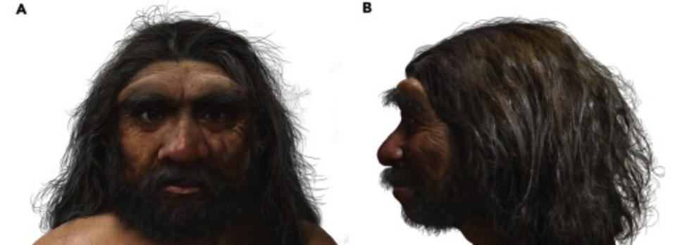 Reconstruction of the Homo longi skull: Anterior view (A) and lateral view, left side (B). - Credit: Stringer et. all