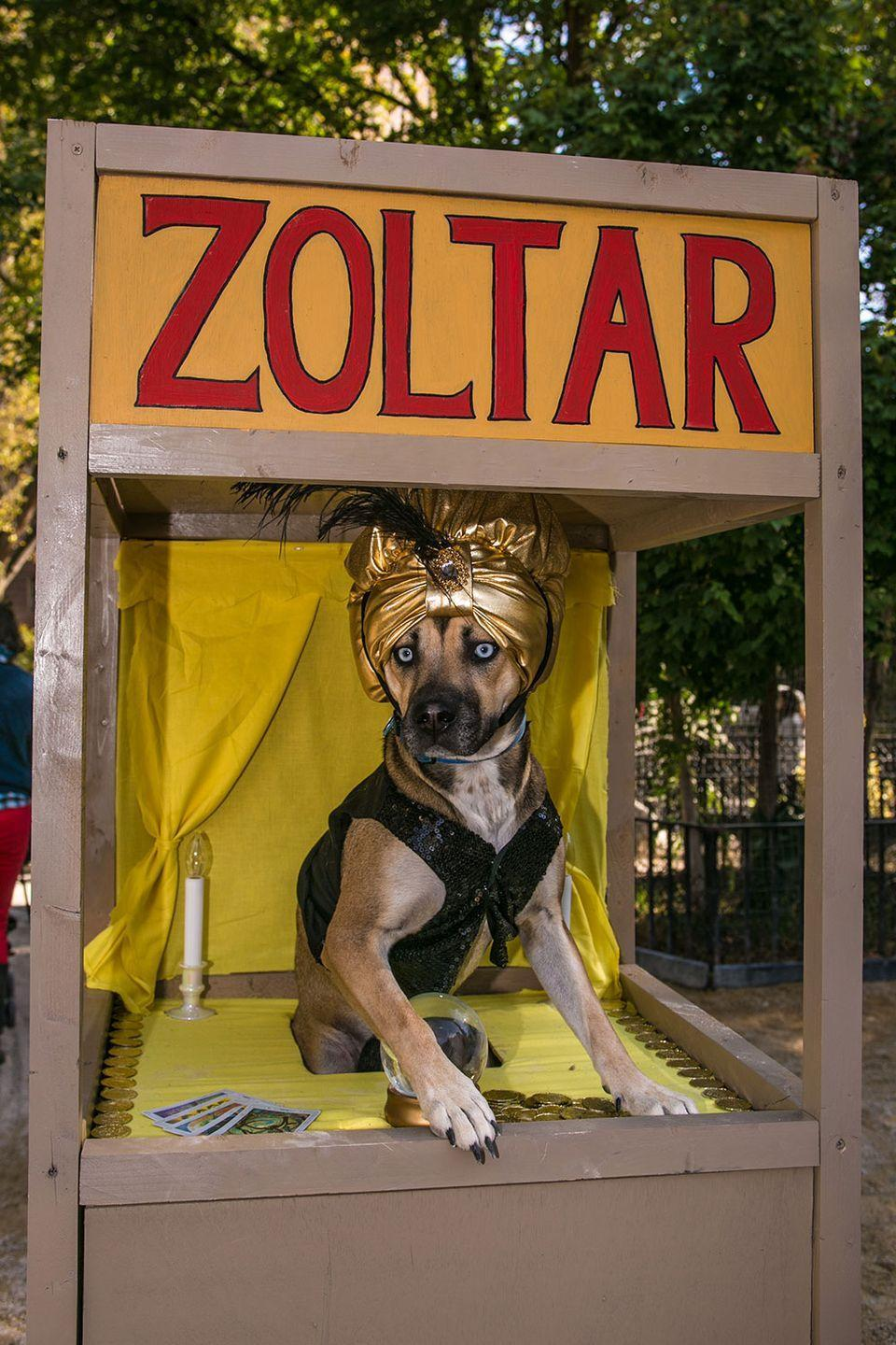 "<p>This fortune teller sees lots of fetch in your future.</p><p><strong>RELATED: </strong><a href=""https://www.goodhousekeeping.com/holidays/halloween-ideas/g1784/popular-pet-halloween-costumes/"" rel=""nofollow noopener"" target=""_blank"" data-ylk=""slk:The 35 Best Dog and Puppy Costume Ideas for Halloween This Year"" class=""link rapid-noclick-resp"">The 35 Best Dog and Puppy Costume Ideas for Halloween This Year</a></p>"