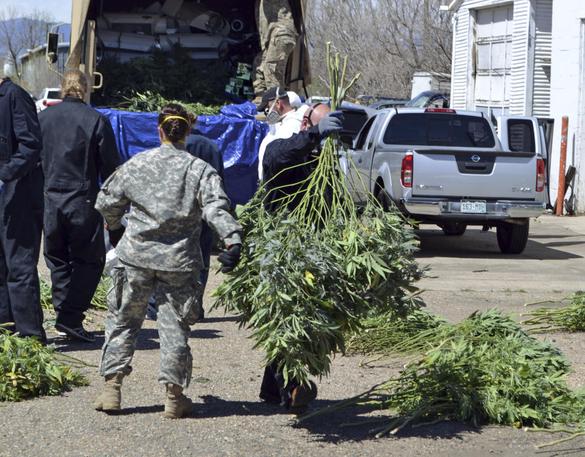 , Overwhelmed by illegal pot, Oregon county declares emergency, The Evepost National News