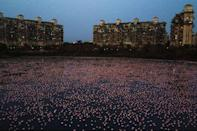 "<p>With less humans out and about, animals have frequently been roaming unexpected places. In India, flamingoes have flocked in their thousands to lakes like this one in Mumbai, lighting up the lake in a shade of pink. </p><p>According to <a href=""https://www.hindustantimes.com/mumbai-news/25-more-flamingos-in-mmr/story-OOBiPNb9rTsInMEAli8e2L.html"" rel=""nofollow noopener"" target=""_blank"" data-ylk=""slk:The Hindustan Times"" class=""link rapid-noclick-resp"">The Hindustan Times</a>, there are currently 25% more flamingoes in the Mumbai area than usually at this time of year.</p>"
