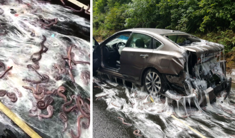 A slimy crash closed Highway 101 in Oregon. (Depoe Bay Fire District/Oregon State Police)