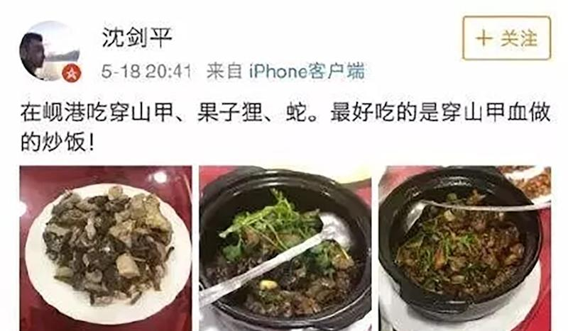 Chinese company's vice-president sacked for eating endangered pangolin and civet on holiday