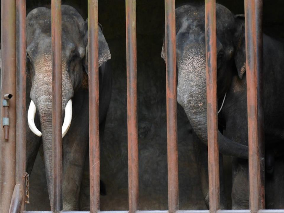 Caged elephants in ChinaKarl Ammann