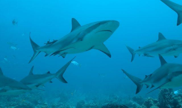 Coronavirus: Half a million sharks 'could be killed for vaccine', experts warn