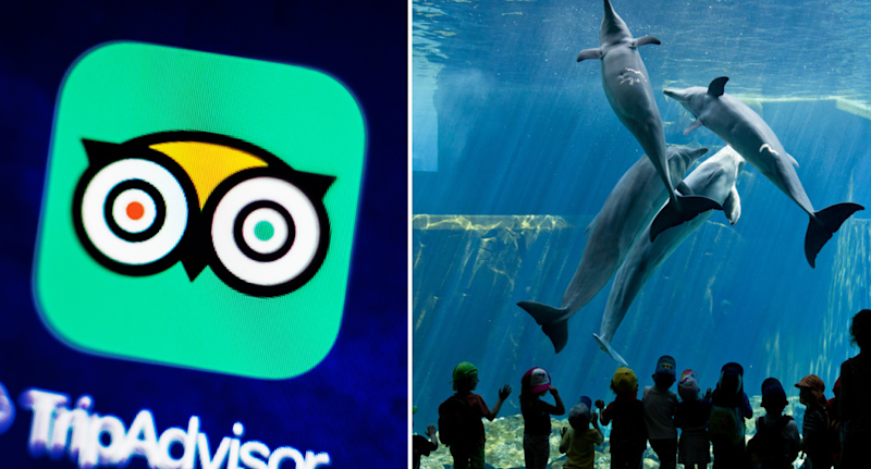 Travel company TripAdvisor has announced they are severing commercial arrangements with dolphin parks. Source: Getty