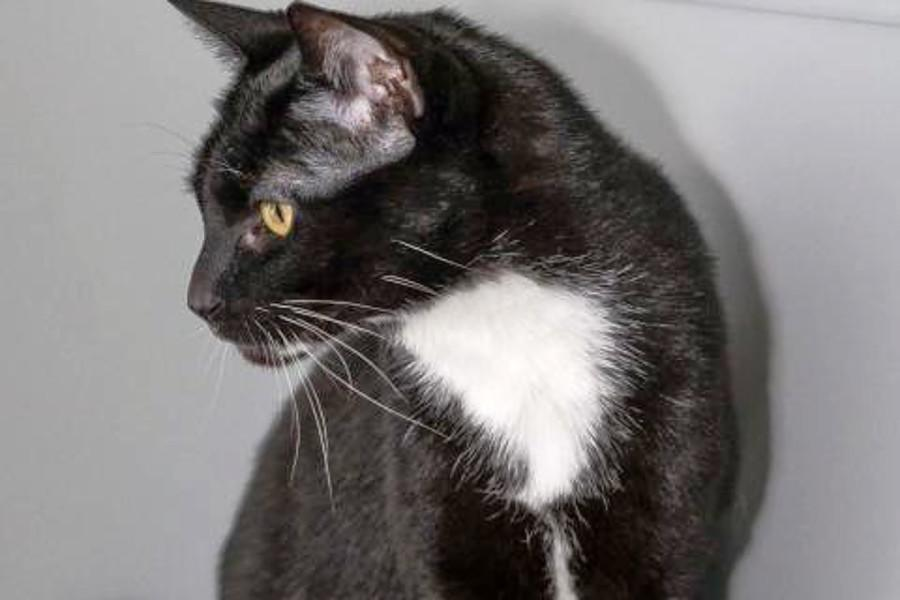 Seeking a forever home: 6 lovable kitties to adopt now in