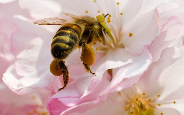 Nearly a Third of America's Bee Colonies Died Over the Winter
