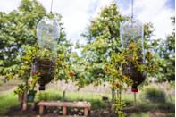 <p>Plastic water bottles take an average of 1,000 years to biodegrade, so avoid throwing them away altogether and reuse them. They're ideal for the garden as they make great alternative planters. Just cut open one side, fill with compost and plant seedlings, then hang with heavy duty string.</p>