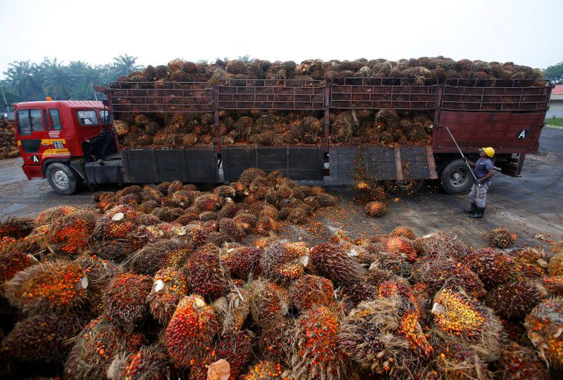 A worker unloads palm oil fruits from a lorry inside a palm oil factory in Salak Tinggi, outside Kuala Lumpur, Malaysia