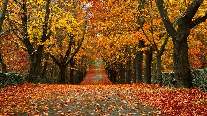 """<p>There's no better place to catch fall's colors than Bristol, which offers historic architecture, stunning landscapes and some of the best fall foliage every year at the scenic Colt State Park. <br></p><p><strong>RELATED: </strong><a href=""""https://www.goodhousekeeping.com/holidays/halloween-ideas/g1249/fall-quotes/"""" rel=""""nofollow noopener"""" target=""""_blank"""" data-ylk=""""slk:50 Fall Quotes That Will Get You Excited for Sweater Weather"""" class=""""link rapid-noclick-resp"""">50 Fall Quotes That Will Get You Excited for Sweater Weather</a></p>"""