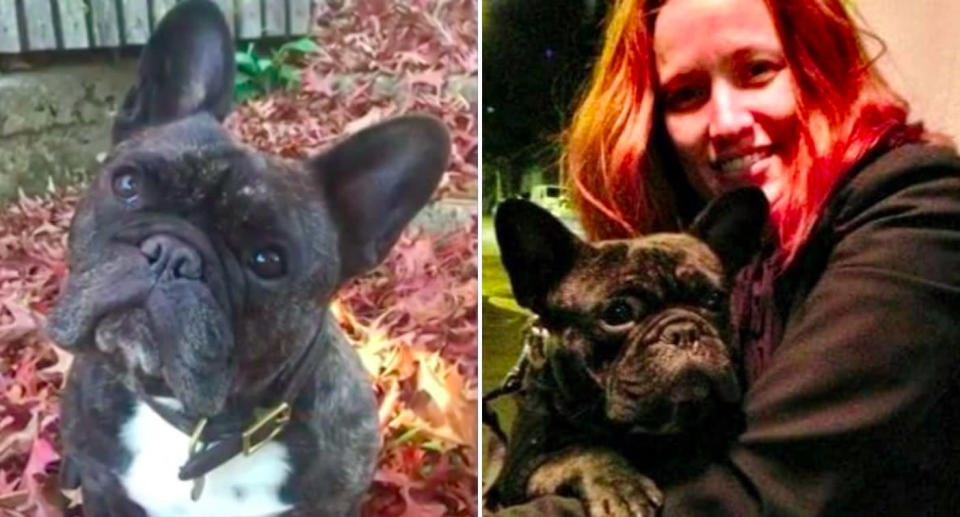 Bruno's heartbroken owners are demanding answers from Virgin after his death on a flight back to Sydney. Source: 7News