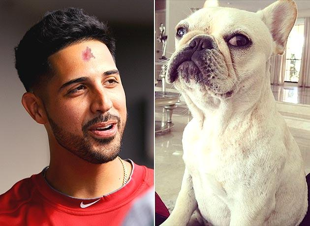 Gio Gonzalez Suffers Rug Burn On Forehead Wrestling With Pet Bulldog Hollywood