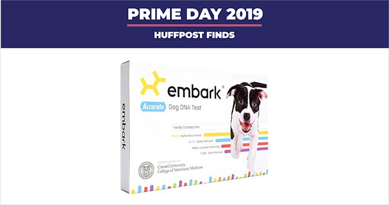 "Earlier this year, we compared <strong><a href=""https://amzn.to/2lJMJjL"" target=""_blank"" rel=""noopener noreferrer"">two of the leading dog DNA test kits</a></strong> and dubbed the <strong><a href=""https://amzn.to/2lJMJjL"" target=""_blank"" rel=""noopener noreferrer"">Embark DNA</a></strong> test as our favorite for the kit&rsquo;s detailed breed information, easy-to-use DNA collection swab and fun added feature (Photo: HuffPost)"