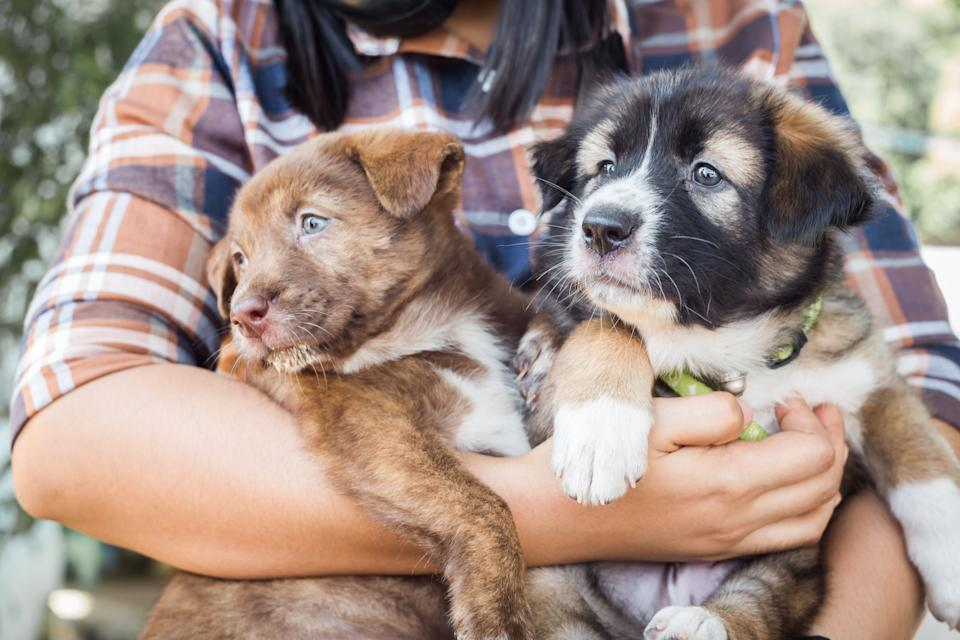 Two cute puppies in girl's arms